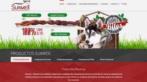 paginas-web-aguascalientes-relief-20
